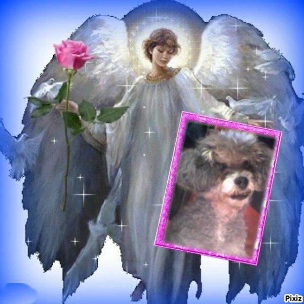 ma caline soie heureuse avec cette ange qui veille sur toi