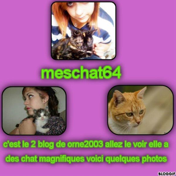 pub meschat64