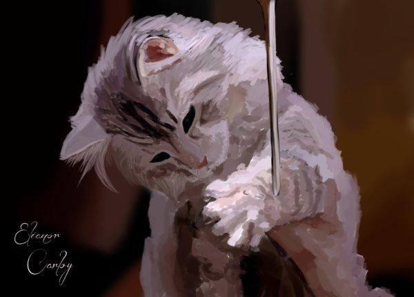 Un petit chaton trop chou !