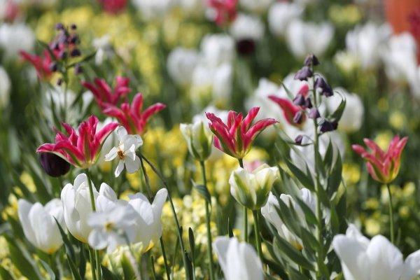 Princess Diana - The white garden à Kensington Palace Avril 2017