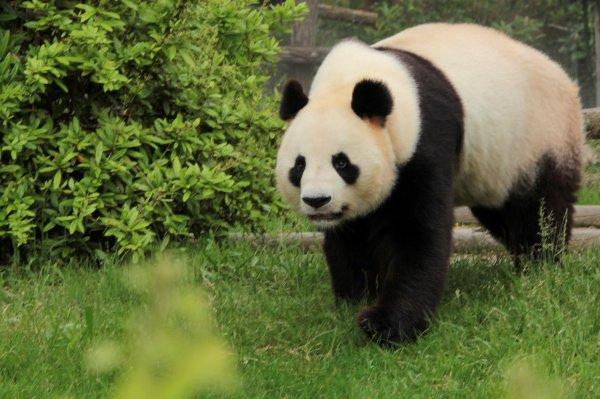 Yuan Zi