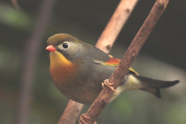 Volière, serre aux oiseaux