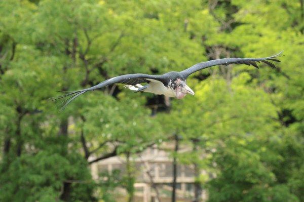 Spectacle des oiseaux
