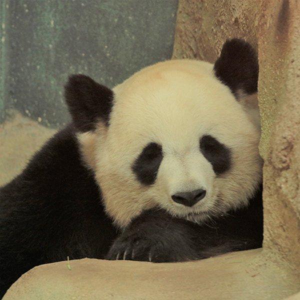 Yuan Meng ( 2 ans )
