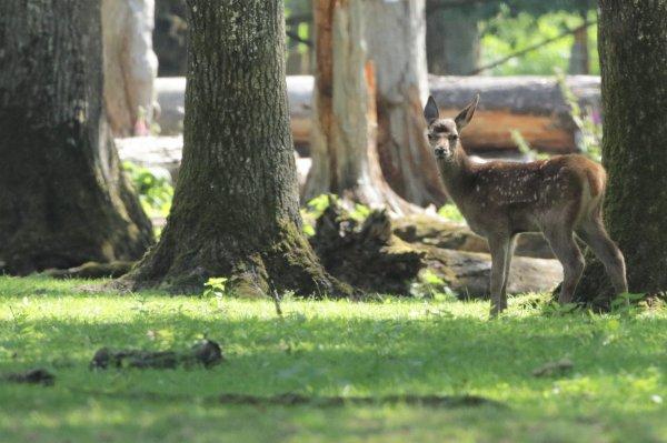 Enclos des cerfs