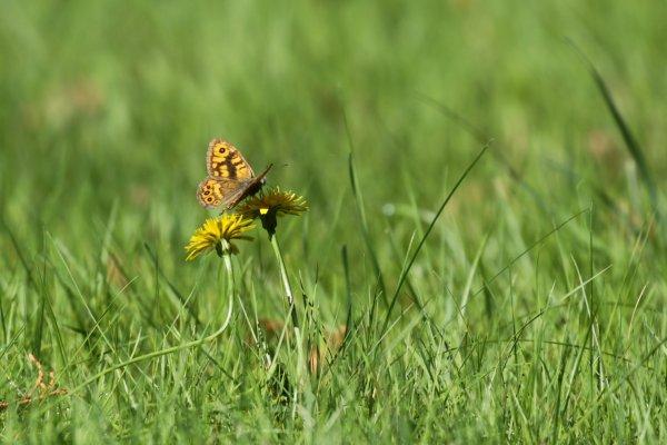 Fleurs & papillons