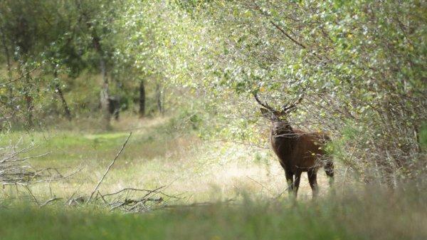 En forêt ...