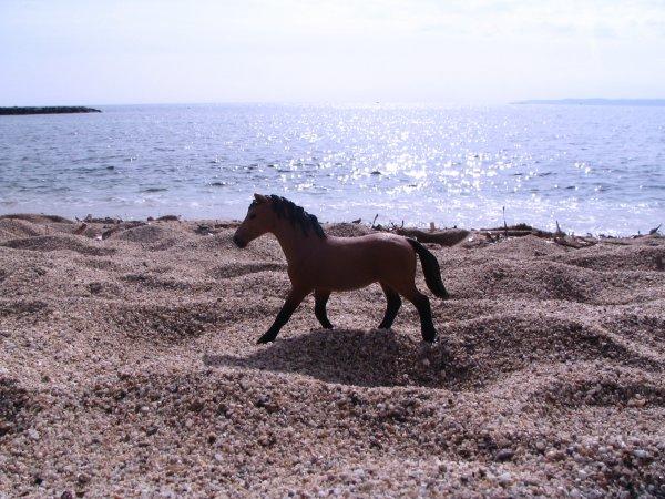 Photos a la plage !