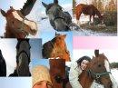 Photo de horse-xx-concour