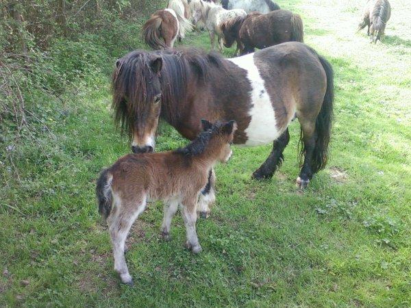 nouvelle naissance a l'élevage