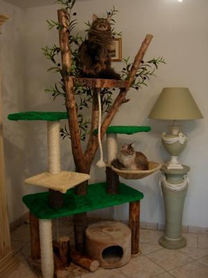 larbre chat maison - Arbre A Chat Maison