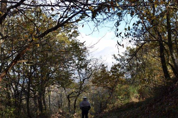 Les Rêveries du promeneur solitaire