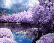 la fleur des fleurs est le bourgeon de la fleur du cerisiers-le samourai est l'homme parmi les hommes.