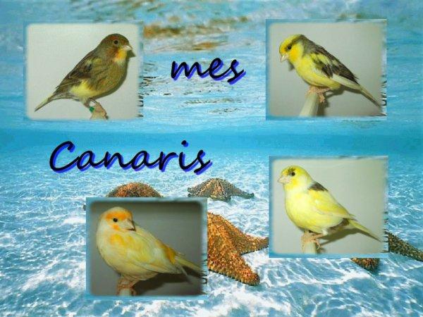 mes canaris