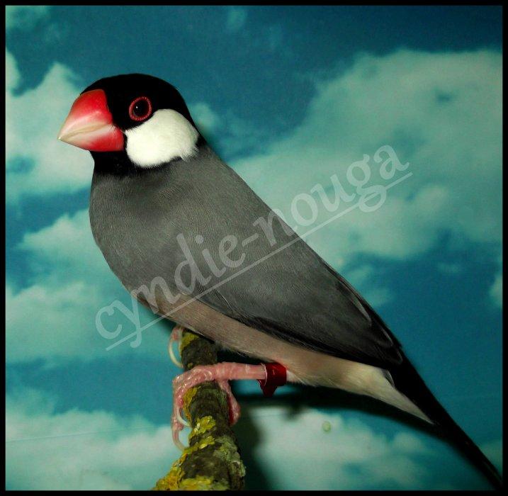 Le blog de mes oiseaux