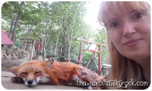 What does the fox say? XD