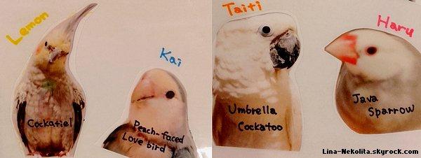 Cafe des perruches et des perroquets