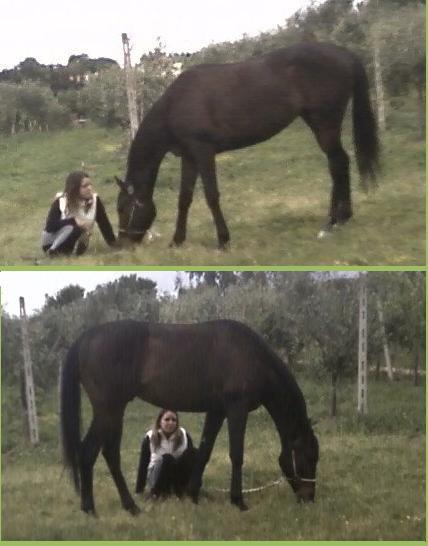 Horse ♥ My LiFe ♥