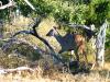 Waterbuck & Kudu