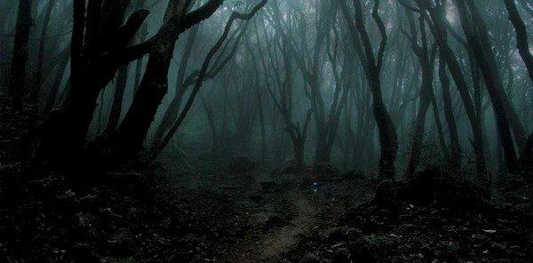 Une forêt désagréable