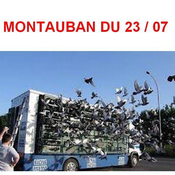 MONTAUBAN  149 PIGEONS 38 PRIX
