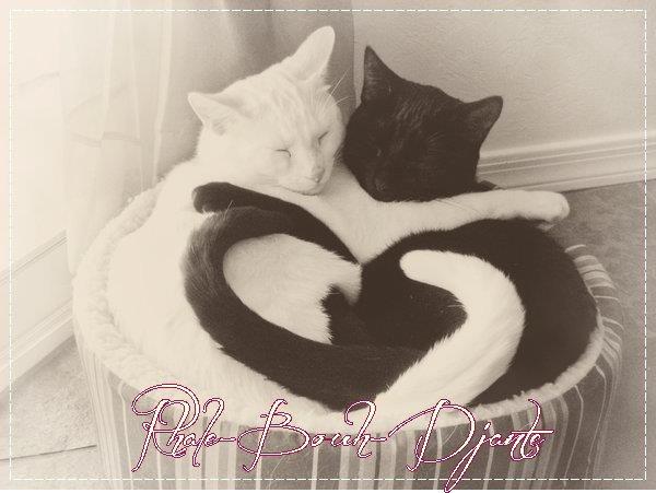 On as pas un Coeur pour l'Homme, un autre pour les Animaux .. On as un Coeur ou on as pas !