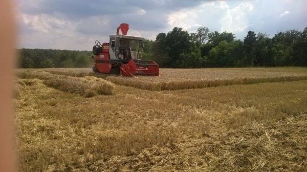 recolte d'essais blé avec hege 160