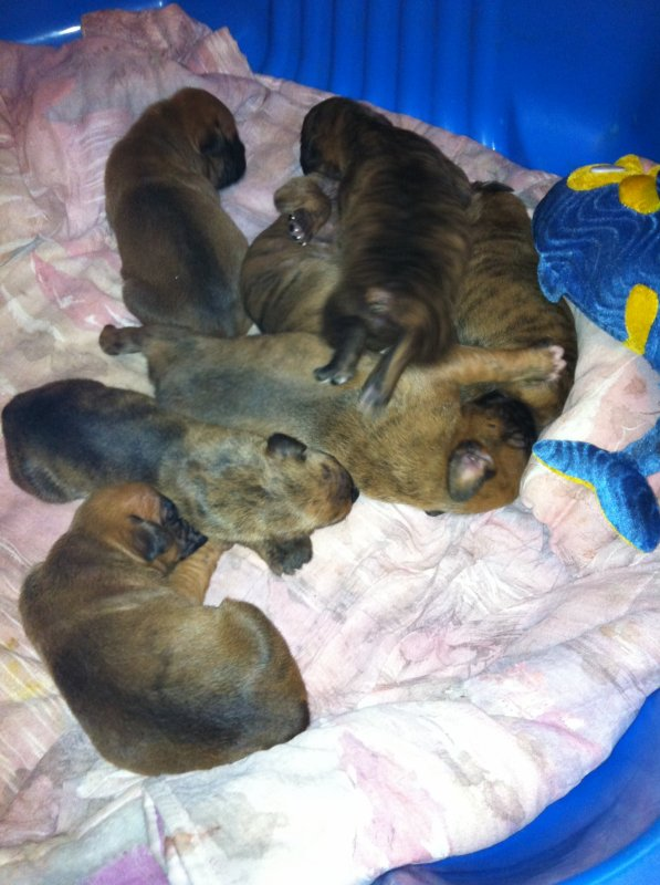 Ma perine avec ses 7 bébés.