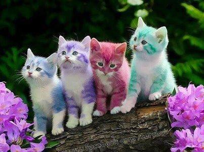 jolie cats