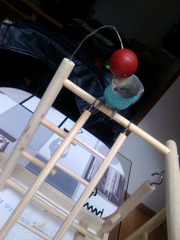 Nouveau jouet de Mr piouck