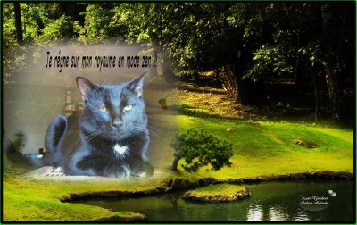 Salèm mon chat !!!