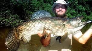 pêche de l'aimara