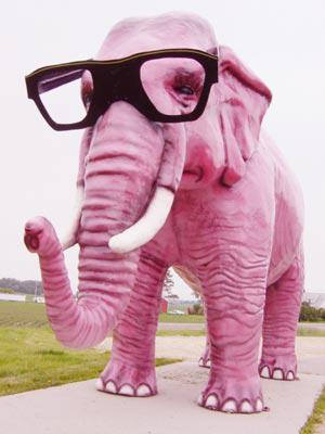 jolie et colorée original à chaud prix imbattable blague sur un éléphant - TU ES TOUJOURS DANS MES PENSEES