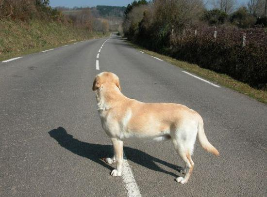 Le journal d'un chien abandonné.