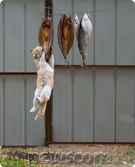 Ché bon chat !!!