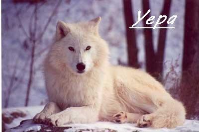 #100 - Dans la peau d'une louve