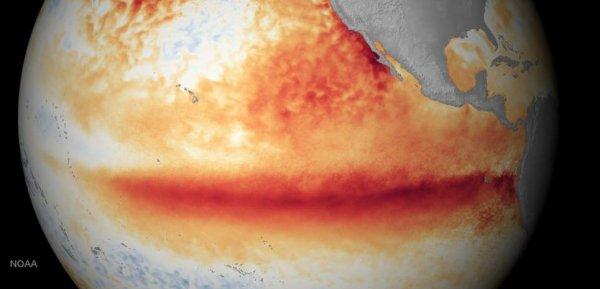 L'IMAGE DU JOUR : Ça se confirme : l'épisode El Nino actuel est l'un des plus forts jamais constaté ! Les dernières données de l'agence américaine de météo confirment que le El Niño de cet hiver sera presqu'aussi puissant que celui de 1997. On le savait : l'enfant terrible de la météo mondiale, ainsi qu'est souvent qualifié El Niño, est de retour. Et cette anomalie périodique de température relevée dans l'océan Pacifique au niveau de l'Équateur semble plus fort que jamais. C'est ce que tend à démontrer le dernier bulletin mensuel de l'agence de la météo. La hausse des températures des eaux océaniques devrait se poursuivre jusqu'à la fin de décembre, début janvier. Les effets sur les météo locales se feront ressentir au moins jusqu'au printemps 2016. Emily Becker, de l'agence de météo américaine a fait un premier focus sur les effets du phénomène en Afrique. Ceux-ci y sont d'ores et déjà bien visibles. La sécheresse sévit sur toute l'Afrique Australe et le bassin du Congo connaît un déficit de précipitations alors que toute la frange nord du golfe de Guinée subit des précipitations inhabituelles en cette période de fin de saison des pluies. L'Ethiopie, la Somalie, le Kenya, la Tanzanie, l'Ouganda, le Burundi et le Rwanda connaissent des excédents de pluie qui peuvent atteindre les 200 millimètres. La Somalie a même subi des inondations. (Source NOAA)