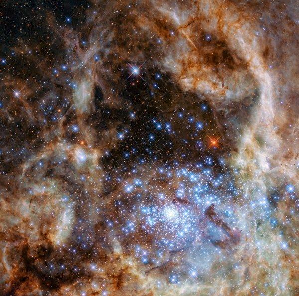 L'IMAGE DU JOUR : LA NÉBULEUSE DE LA TARENTULE dans le Grand Nuage Magellan, environ 170.000 années-lumière de distance, le jeune groupe héberge beaucoup d'étoiles extrêmement massives, chaudes et lumineuses dont l'énergie est surtout émise dans l'ultra-violet. Les scientifiques ont combiné des images prises avec différents télescopes terrestre et le Satellite HUBBLE pour identifier certaines des étoiles plus massives et plus brillantes. Sur cette image est visible la découverte d'une douzaine d'étoiles excédant 50 masses solaires, cette nouvelle étude a révélé la présence de neuf étoiles très massives dans le groupe, tout plus de 100 fois plus massives que le Soleil. Les étoiles détectées sont non seulement extrêmement massives, mais aussi extrêmement brillantes. (Sources NASA-ESA)