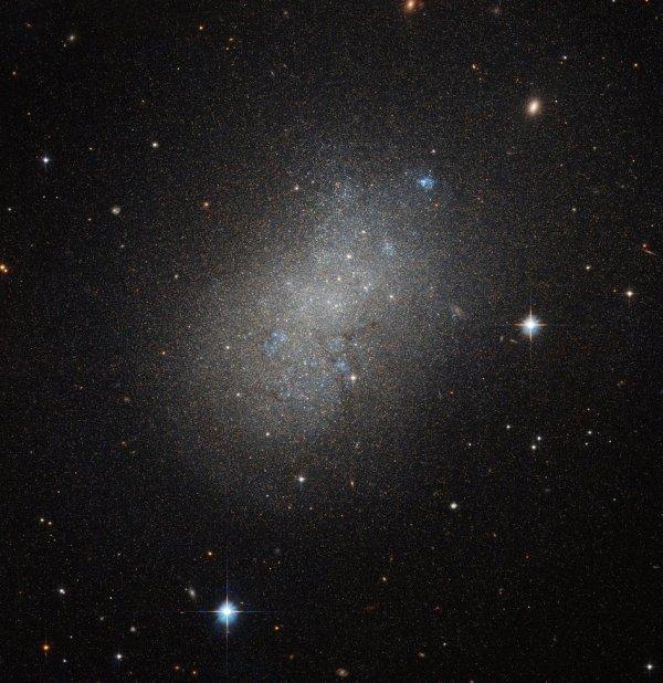 L'IMAGE DU JOUR : Une galaxie irrégulière !! Cette image du télescope spatial HUBBLE, montre la lueur des étoiles lointaines au sein de NGC 5264, une galaxie naine située à plus de 15 millions d'années-lumière dans la constellation de l'Hydre. Ces galaxies naines comme NGC 5264 possèdent généralement autour d'un milliard d'étoiles. NGC 5264 possède clairement une forme irrégulière - contrairement à la spirale plus commune aux galaxies elliptiques - avec des n½uds de formation d'étoiles bleues. Les astronomes pensent que cela est dû aux interactions gravitationnelles entre NGC 5264 et d'autres galaxies à proximité. (Sources ESA-NASA-HUBBLE)