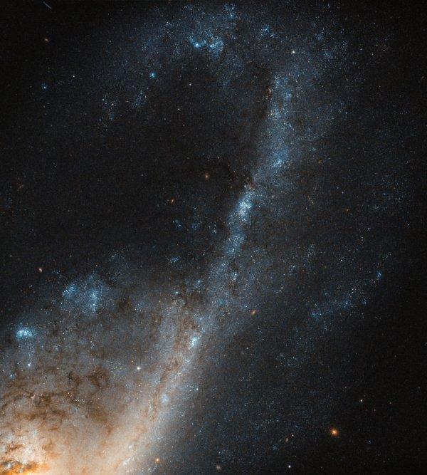 L'IMAGE DU JOUR : GALAXIE DANS LA CONSTELLATION DE LA VIERGE Malgré tous les efforts, la formation et l'évolution de la galaxie sont encore loin d'être pleinement comprises. Heureusement, les conditions que nous voyons dans certaines galaxies peuvent nous en dire beaucoup sur la façon dont elles ont évolué avec le temps. Certaines galaxies contiennent une région où les étoiles se forment à un taux aussi rapide que la galaxie gère son approvisionnement en gaz plus rapidement qu'elle ne peut être reconstituée ! NGC 4536 est une telle galaxie, capturée ici avec de beaux détails par la Camera 3 de HUBBLE. Situé à environ 50 millions d'années-lumière dans la constellation de Vierge, c'est un carrefour de formation d'étoiles extrêmes. Il existe plusieurs facteurs différents qui peuvent conduire à un environnement aussi idéal dans lequel les étoiles peuvent se former à un rythme aussi rapide. Sur le plan crucial, il doit y avoir un approvisionnement suffisant en gaz. Cela pourrait être acquis de plusieurs façons - par exemple, en passant très près d'une autre galaxie, dans une collision galactique complète, ou à la suite d'un événement qui oblige la présence beaucoup de gaz dans un espace relativement petit. (Sources ESA-NASA-HUBBLE)