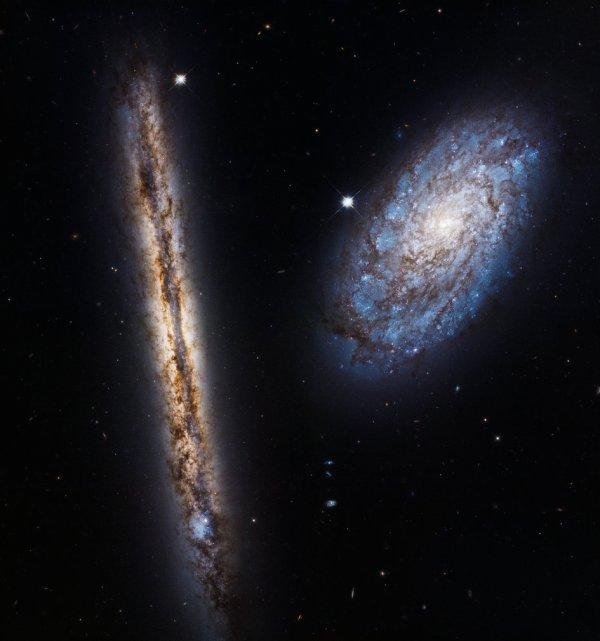 L'IMAGE DU JOUR : COUPLE COSMIQUE ! Cet étonnant couplage cosmique des deux galaxies en spirale NGC 4302 (à gauche) et NGC 4298 (à droite) a été imaginé par le télescope spatial Hubble. Nous apparaissant exactement par la tranche, la galaxie spirale NGC 4302 (sur la gauche) se trouve à environ 55 millions d'années-lumière dans la constellation de la Chevelure de Bérénice. Faisant partie du vaste amas de galaxies de la Vierge, son diamètre est d'environ 87 000 années-lumière, soit légèrement inférieur à celui de notre propre Voie lactée. NGC 4298, galaxie compagne de la précédente, est également une spirale chargée de poussières, mais orientée très différemment par rapport à notre point de vue. On peut ainsi nettement distinguer ses bras spiraux chargés de jeunes étoiles bleues, tout comme son noyau tirant sur le jaune. Cette image en lumière visible a été prise pour marquer le 27e anniversaire du lancement du légendaire télescope spatial Hubble, intervenu le 24 avril 1990. (Sources ESA-NASA-HUBBLE)