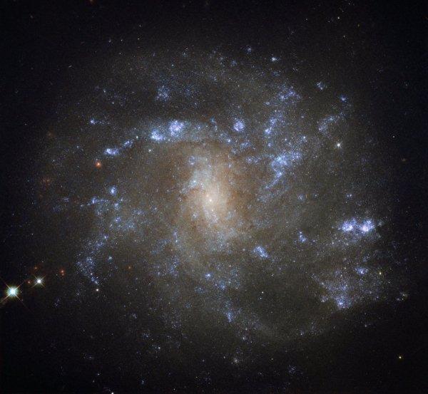 L'IMAGE DU JOUR : Découverte par l'astronome britannique William Herschel il y a plus de 200 ans, NGC 2500 se trouve à environ 30 millions d'années-lumière. Comme le montre cette image du télescope Spatial HUBBLE, NGC 2500 est un type particulier de galaxie spirale connue sous le nom de spirale barrée, ses bras se déroulant à partir d'un noyau brillant et allongé. Les spirales barrées sont en fait plus fréquentes qu'on ne le pensait autrefois. Environ les deux tiers de toutes les galaxies en spirale - y compris la voie lactée - présentent ces barres droites coupant leurs centres. Ces structures cosmiques agissent comme des pépinières incandescentes pour les étoiles nouveau-nées et entourent le matériau vers le noyau actif d'une galaxie. NGC 2500 est toujours en train de former de nouvelles étoiles, bien que ce processus semble se produire très inégalement. La moitié supérieure de la galaxie - où les bras en spirale sont légèrement mieux définis - accueille beaucoup plus de régions formant des étoiles que la moitié inférieure, comme l'indiquent les îlots lumineux et pointillés. (Sources ESA-NASA-HUBBLE)
