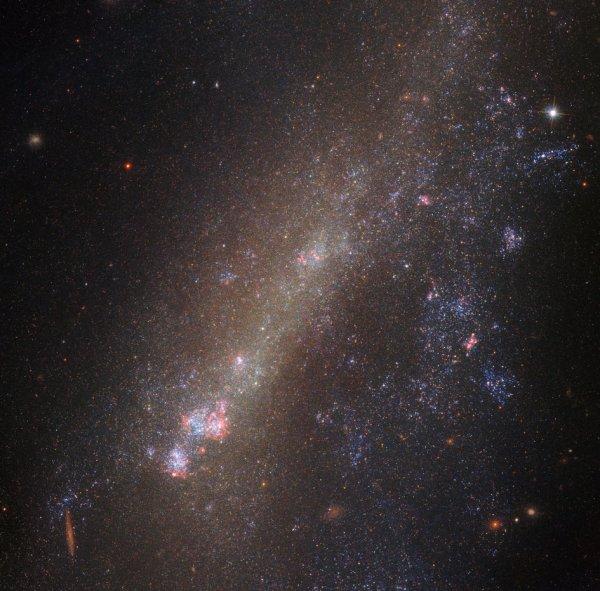L'IMAGE DU JOUR : UN DUO DÉFORMÉ ! La gravité gouverne les mouvements du cosmos. Il forme des bandes de galaxies ensemble pour former de petits groupes et des grappes de galaxies plus massives, et apporte des duos si proches qu'ils commencent à s'étirer les uns des autres. Ce dernier scénario peut avoir des conséquences extrêmes, les membres de paires de galaxies en interaction étant souvent déformés, déchirés ou entraînés à se briser, abandonnant leurs anciennes identités et fusionnant pour former une seule accumulation de gaz, de poussière et d'étoiles. Le sujet de cette image du télescope Spatiale HUBBLE, IC 1727, interagit actuellement avec son voisin proche, NGC 672 (qui est juste hors de cadre). Les interactions de la paire ont déclenché des phénomènes particuliers et intrigants dans les deux objets - le plus visiblement dans IC 1727. La structure de la galaxie est visiblement tordue et asymétrique, et son noyau lumineux a été traîné hors-centre. Dans les galaxies qui interagissent comme celles-ci, les astronomes voient souvent des signes de formation intense d'étoiles et localisent les grappes d'étoiles nouvellement formées. On pense qu'ils sont causés par la gravité, la redistribution et le compactage du gaz et de la poussière. En fait, les astronomes ont analysé la formation des étoiles au sein de IC 1727 et NGC 672 et ont découvert quelque chose d'intéressant: les observations montrent que des rafales simultanées de formation d'étoiles se sont produites dans les deux galaxies entre 20 et 30 et 450 à 750 millions d'années. L'explication la plus probable pour cela est que les galaxies sont en effet une paire d'interaction, s'approchant les uns des autres de temps en temps et en remuant le gaz et la poussière lorsqu'ils passent à proximité. (Sources NASA-HUBBLE-ESA)