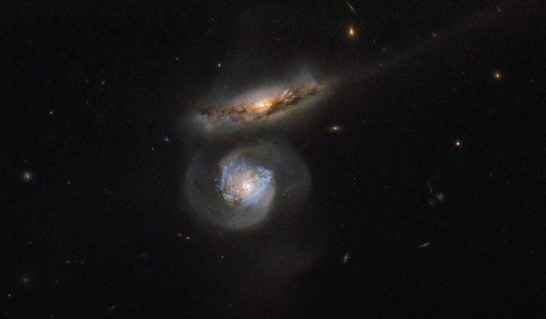 L'IMAGE DU JOUR : DES MICRO-ONDES AUX MEGA-EPAVES ! Les phénomènes à travers l'univers émettent des rayonnements couvrant l'ensemble du spectre électromagnétique - des rayons gamma à haute énergie, qui sortent des événements les plus énergétiques du cosmos, des micro-ondes à faible énergie et des ondes radio. Les micro-ondes, le même rayonnement qui peut chauffer votre dîner, sont produites par une multitude de sources astrophysiques, y compris les émetteurs forts connus sous le nom de masers (lasers à micro-ondes), des émetteurs encore plus forts avec le nom un peu méchant des megamasers et les centres de certaines galaxies. Des centres galactiques particulièrement intenses et lumineux sont connus sous le nom de noyaux galactiques actifs. Ils sont probablement entraînés par la présence de trous noirs supermassifs, qui font glisser le matériau environnant vers l'intérieur et crache des jets lumineux et des rayonnements. Les deux galaxies montrées ici, par le télescope spatial HUBBLE, s'appellent MCG + 01-38-004 (la supérieure, à teint rouge) et MCG + 01-38-005 (la plus basse, la teinte bleue). MCG + 01-38-005 est un type spécial de megamaser; Le noyau galactique actif de Galaxie élimine d'énormes quantités d'énergie, ce qui stimule les nuages de l'eau environnante. Les atomes constitutifs de l'hydrogène et de l'oxygène de l'eau sont capables d'absorber une partie de cette énergie et de la réémettre à des longueurs d'ondes spécifiques, dont l'une relève du régime des micro-ondes. MCG + 01-38-005 est ainsi connu comme un megamaser à l'eau! Les astronomes peuvent utiliser de tels objets pour rechercher les propriétés fondamentales de l'Univers. Les émissions de micro-ondes de MCG + 01-38-005 ont été utilisées pour calculer une valeur raffinée pour la constante Hubble, une mesure de la rapidité avec laquelle l'Univers se développe. Cette constante est nommée d'après l'astronome dont les observations ont été responsables de la découverte de l'Univers en expansion et aprè