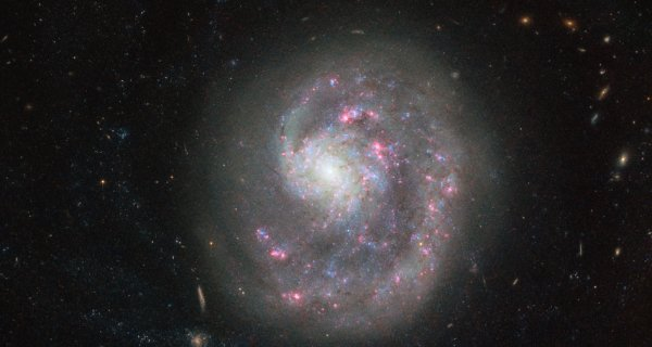 """L'INFO ASTRO & L'IMAGE DU JOUR : RECHERCHE COSMIQUE ! Cette nouvelle image de la semaine, prise par le télescope spatial HUBBLE de la NASA / ESA, montre la galaxie naine NGC 4625, située à environ 30 millions d'années-lumière dans la constellation des chiens de chasse. Cette image, révèle le bras spiral unique de la galaxie, ce qui lui donne un aspect asymétrique. Mais pourquoi y a-t-il un seul bras en spirale, alors que les galaxies spirales en ont normalement au moins deux ? Les astronomes ont regardé NGC 4625 dans différentes longueurs d'onde dans l'espoir de résoudre ce mystère cosmique. Observations dans l'ultraviolet fourni le premier indice: dans la lumière ultraviolette le disque de la galaxie apparaît quatre fois plus grand que sur l'image décrite ici. Une indication qu'il y a un grand nombre de très jeunes et chaudes étoiles se formant dans les régions extérieures de la galaxie. Ces jeunes étoiles ont seulement environ un milliard d'années, environ 10 fois plus jeunes que les étoiles observées dans le centre. Les astronomes ont d'abord supposé que ce taux élevé de formation d'étoiles était déclenché par l'interaction avec une autre galaxie naine voisine appelée NGC 4618. Ils ont spéculé que NGC 4618 pourrait être le coupable """"harcelant"""" NGC 4625, lui faisant perdre tous les bras en spirale sauf un. En 2004, les astronomes ont trouvé la preuve de cette affirmation: Le gaz dans les régions ultrapériphériques de la galaxie naine NGC 4618 a été fortement affecté par NGC 4625. (Sources NASA-HUBBLE-ESA)"""