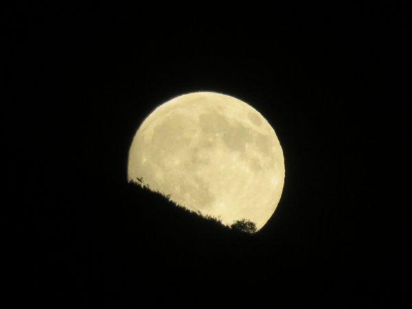 L'INFO ASTRO DU JOUR : L'UNIQUE SUPER-LUNE DE 2017, C'EST AUJOURD'HUI !! Préparez-vous à voir sortir de l'horizon une Pleine Lune un peu plus grande et brillante que d'habitude... Il faudra attendre une vingtaine de minutes après le coucher du Soleil pour voir la Pleine Lune sortir de l'horizon nord-est. Toujours impressionnante à son lever, elle apparaîtra cette fois un peu plus grande et brillante que d'habitude. Ce sera la première et la seule super-Lune de l'année (il y en a eu trois en 2016). On parle de super-Lune quand la Pleine Lune coïncide avec le moment où l'astre atteint sa plus petite distance avec la Terre. Car l'orbite de notre satellite n'est pas circulaire et sa distance avec nous varie au cours des lunaisons. Ce 3 décembre, la Lune sera donc à 357.983 km à son lever, presque au périgée, le point de son orbite le plus proche du globe terrestre ! Rien d'extraordinaire... Juste une occasion d'observer le ciel ! (Source ACL-SA)
