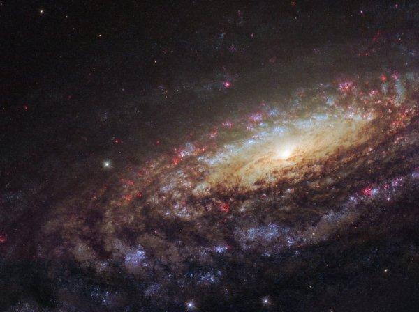 L'IMAGE ASTRO DU JOUR : DES JUMEAUX AVEC DES DIFFÉRENCES ! Cette image du télescope spatial HUBBLE de la NASA montre une galaxie spirale connue sous le nom de NGC 7331, découverte par le prolifique chasseur de galaxies William Herschel en 1784, elle est située à environ 45 millions d'années-lumière dans la constellation de Pégase. La galaxie exhibe ses beaux bras qui tournent dans un tourbillon autour de sa région centrale lumineuse. NGC 7331 est similaire en taille, en forme et en masse à la Voie Lactée. Elle a également un taux de formation d'étoiles comparable, héberge un nombre similaire d'étoiles, possède un trou noir supermassif central et des bras spiraux comparables. La principale différence entre nos galaxies est que NGC 7331 est une galaxie spirale non liée - elle n'a pas de «barre» d'étoiles, de gaz et de poussière coupant son noyau, comme nous le voyons dans la Voie Lactée. Son renflement central présente également un motif de rotation bizarre et inhabituel, tournant dans la direction opposée au disque galactique lui-même. En étudiant des galaxies similaires, nous détenons un miroir scientifique, nous permettant de mieux comprendre notre environnement galactique que nous ne pouvons pas toujours observer, ainsi que le comportement galactique et l'évolution dans son ensemble. (Sources NASA-HUBBLE-ESA)