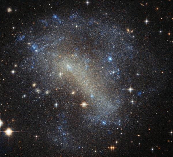 L'INFO ASTRO & L'IMAGE DU JOUR : UNE FRÉNÉSIE D'ÉTOILES. Découverte en 1900 et photographié ici par le télescope spatial HUBBLE de la NASA, IC 4710 est indéniablement spectaculaire. La galaxie est un nuage d'étoiles brillantes, avec des poches brillantes marquant des éclats de nouvelle formation d'étoiles, dispersées autour de ses bords. IC 4710 est une galaxie irrégulière naine. Comme son nom l'indique, de telles galaxies sont d'apparence irrégulière et chaotique, dépourvues de renflements centraux et de bras en spirale. On pense que les galaxies irrégulières peuvent avoir été des spirales ou des elliptiques, mais se sont déformées au cours du temps par des forces gravitationnelles externes lors d'interactions ou de fusions avec d'autres galaxies. IC 4710 se trouve à environ 25 millions d'années-lumière dans la constellation méridionale du Paon, et contient également le troisième amas globulaire dans le ciel, NGC 6752, la galaxie spirale NGC 6744 et six systèmes planétaires connus (dont HD 181433 qui héberge une super-Terre).(Sources NASA-HUBBLE-ESA)