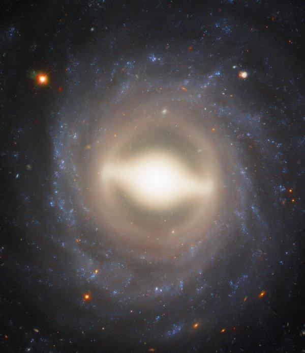 """L'IMAGE & L'INFO ASTRO DU JOUR : SPIRALES ET SUPERNOVAE. Cette image étonnante de HUBBLE montre la galaxie majestueuse NGC 1015, à 118 millions d'années-lumière de la Terre. Sur cette image, nous la voyons face à face, avec ses bras tourbillonnants magnifiquement symétriques et son renflement central brillant, créant une scène semblable à un feu d'artifice. NGC 1015 a un centre lumineux assez grand et des bras spiraux lisses et bien enroulés et une """"barre"""" centrale de gaz et d'étoiles. Cette forme conduit NGC 1015 à être classée comme une galaxie spirale barrée, tout comme notre maison, la Voie Lactée. Des barres sont trouvées dans environ deux tiers de toutes les galaxies spirales, et les bras de cette galaxie tournent vers l'extérieur d'un anneau jaune pâle encerclant la barre elle-même. Les scientifiques croient que tous les trous noirs affamés au centre des spirales barrées canalisent le gaz et l'énergie des bras externes dans le noyau via ces barres incandescentes, alimentant le trou noir, et produisant la naissance des étoiles au centre tout en construisant le renflement central de la galaxie. En 2009, une supernova de Type Ia nommée SN 2009ig a été repérée dans NGC 1015, l'un des points lumineux en haut à droite du centre de la galaxie. Ces types de supernovae sont extrêmement importantes: elles sont le résultat de l'explosion des naines blanches qui ont des étoiles compagnes, et atteignent toujours le même niveau de luminosité, 5 milliards de fois plus clair que le Soleil. Connaître la véritable luminosité de ces événements, et en les comparant à leur luminosité apparente, donne aux astronomes une chance unique de mesurer les distances dans l'Univers. (Sources NASA-HUBBLE-ESA)"""