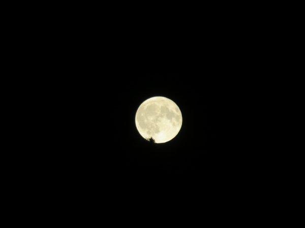 LES IMAGES & L'INFO ASTRO DU JOUR : De la Lune à Vénus, un collier de perles planétaires à observer en cette fin du mois d'aout, une heure après le coucher du soleil. Vénus est la plus éclatante à l'Ouest, en direction du coucher du Soleil. A sa gauche, la géante gazeuse Jupiter, et encore à gauche un peu moins lumineuse car plus lointaine, voici Saturne. Puis toujours vers l'Est, ce phare très étincelant d'une couleur rouge, c'est la planète Mars. Et enfin la Pleine Lune à l'Est (se levant au dessus du Pic du Jer pour les Lourdais !)